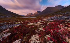 Picture autumn, mountains, lake, vegetation, Khibiny, The Kola Peninsula, Konstantin Voronov
