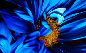 Picture flower, nature, blue, plant, Macro, bloom