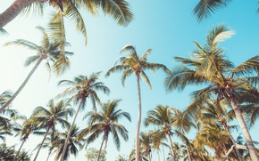 Picture beach, summer, the sky, palm trees, summer, beach, beautiful, paradise, palms, tropical