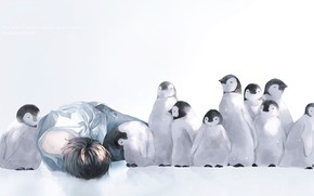 Picture snow, penguins, guy, Chicks, by 世