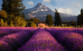 Picture field, the sun, flowers, mountains, nature, house, lavender, Doug Shearer