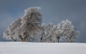 Picture winter, snow, trees