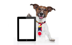Picture face, table, humor, paws, glasses, tie, white background, tablet, Jack Russell Terrier
