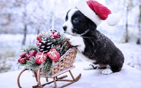 Picture winter, frost, look, snow, red, nature, pose, Park, black and white, toys, dog, baby, Christmas, …
