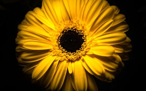 Picture flower, macro, yellow, background, petals