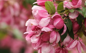 Picture flowers, spring, flowering tree