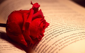 Picture rose, book, red