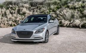 Picture car, machine, grass, sedan, grey, Genesis, gray car, Genesis G80