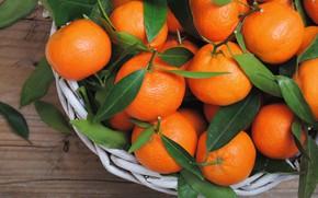Picture citrus, leaves, tangerines