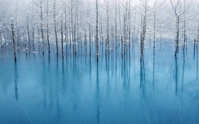 Picture winter, snow, reflection, the trunks of the trees, meltwater