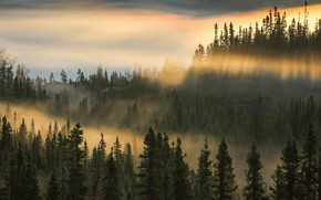 Picture forest, light, mountains, fog, hills, morning, ate
