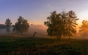 Picture field, summer, the sky, grass, light, trees, landscape, nature, fog, dawn, hills, silence, field, morning, ...