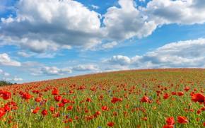 Picture field, summer, clouds, flowers, Maki, slope, hill, meadow, red, blue sky, poppy field