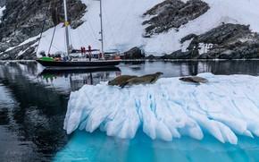 Picture winter, sea, animals, snow, nature, people, yacht, floe, seals, Александр Лозицкий