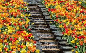 Picture water, flowers, steps, flowerbed, waterfall