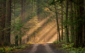 Picture forest, the sun, light, trees