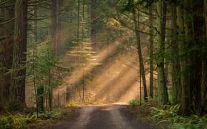 Wallpaper forest, light, trees, the sun