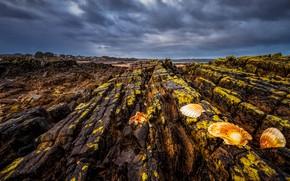 Picture sea, the sky, clouds, shore, shell, rocky, lichens, stone ridge