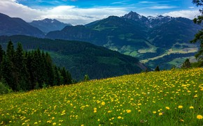 Picture field, forest, flowers, mountains, glade, the slopes, spring, slope, dandelions