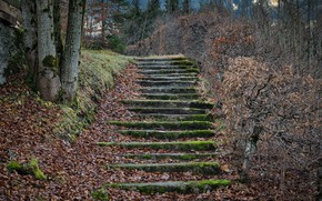 Picture autumn, leaves, trees, nature, moss, ladder