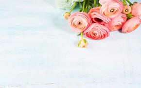 Picture background, blue, bouquet, Ranunculus, Buttercup