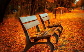 Picture autumn, leaves, Park, benches, benches, shop