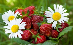 Picture STRAWBERRY, CHAMOMILE, FOOD, BERRIES