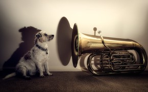 Picture each, dog, pipe