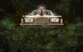 Picture machine, forest, fantasy, art, Illustrator, Alex Shiga, King of the jungle