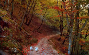 Picture Autumn, Trees, Forest, Trail, Fall, Autumn, Dogs, Forest, Trees, Path, Dogs