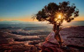 Picture the sun, light, sunset, mountains, tree, USA, pine, canyons