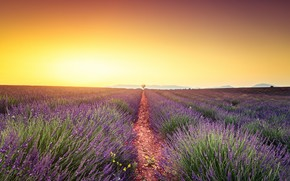 Picture field, summer, the sky, the sun, light, flowers, nature, dawn, France, morning, horizon, path, a …
