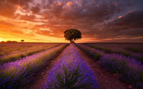 Picture field, the sky, sunset, lavender