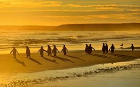Picture sea, beach, light, birds, shore, penguins