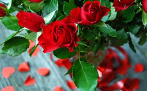 Picture roses, petals, tape, red, vase, buds