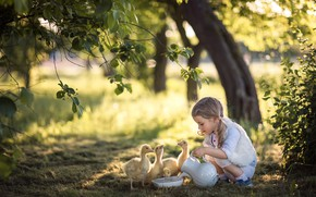 Picture summer, nature, girl, pitcher, child, Chicks, the goslings, Radoslaw Dranikowski