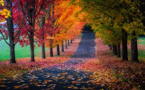 Picture road, autumn, leaves, trees, foliage
