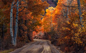 Wallpaper road, autumn, forest