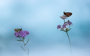 Picture macro, butterfly, background