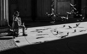 Picture birds, people, pigeons, accordionist