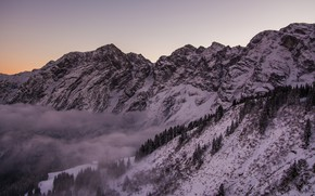 Picture trees, Germany, mountains, snow, mist, Rossfeld