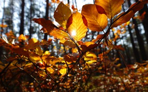 Picture autumn, forest, leaves, the sun, branches