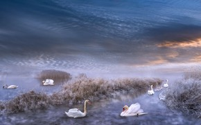 Picture winter, frost, the sky, grass, clouds, snow, birds, clouds, fog, rendering, shore, dal, haze, Swan, …