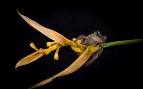 Picture flower, frog, black background