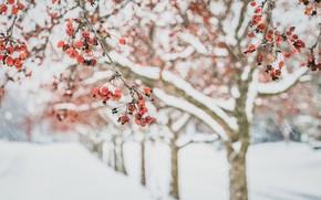 Picture winter, apples, garden