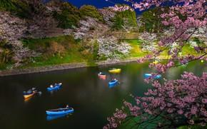 Picture boat, spring, Japan, Sakura