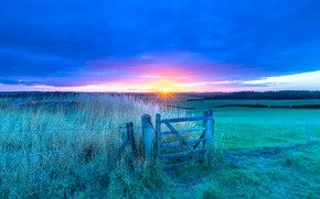 Picture field, forest, grass, light, dawn, field, morning, pasture, the fence, meadows