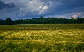 Picture field, forest, clouds, rye, ears, cereals