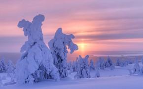 Picture winter, snow, trees, landscape, nature, morning, ate, Finland, Maxim Evdokimov