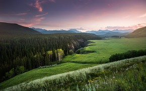 Picture forest, hills, view, field, Canada